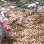 Musical Mushrooms for Cranleigh School