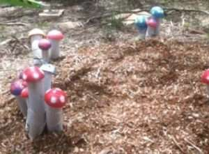 musical mushrooms