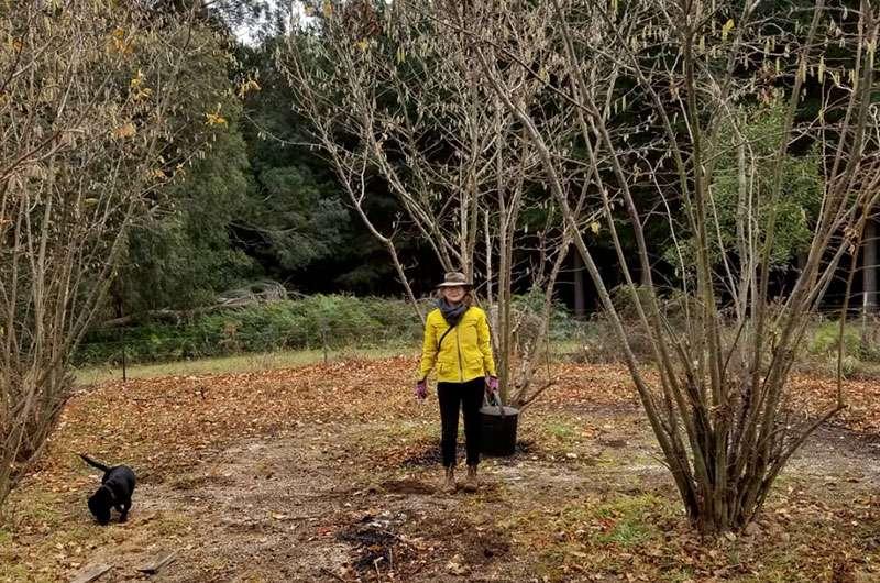 Harvesting truffles