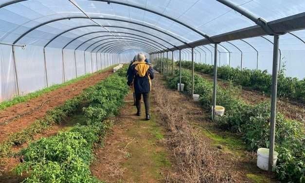 Farmers market: behind the scenes